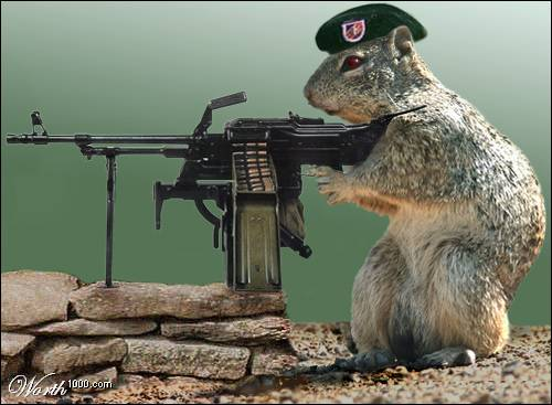 badassquirrel.jpg