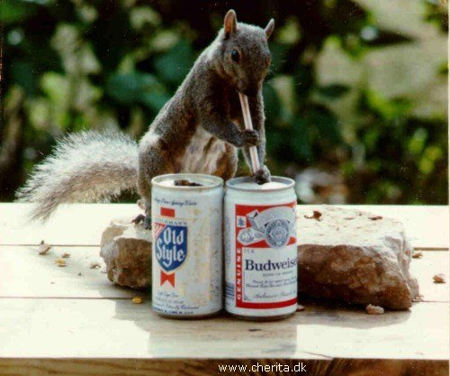 beeringsquirrel.jpg