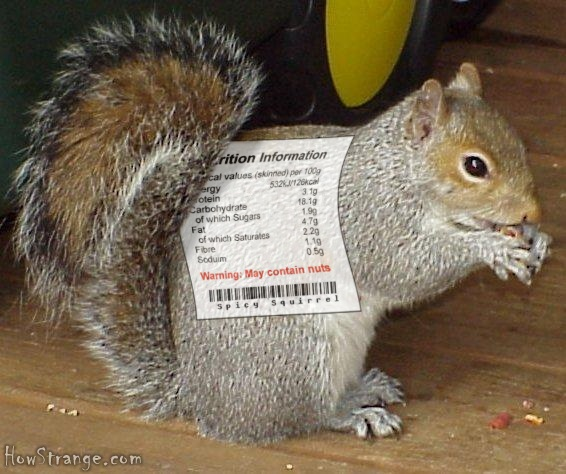 nutriotionalsquirrel.jpg