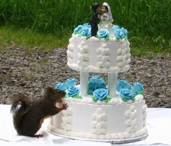 squirrel eating wedding cake.jpg