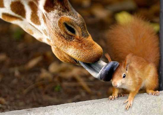 squirrel getting giraffe bath.jpg